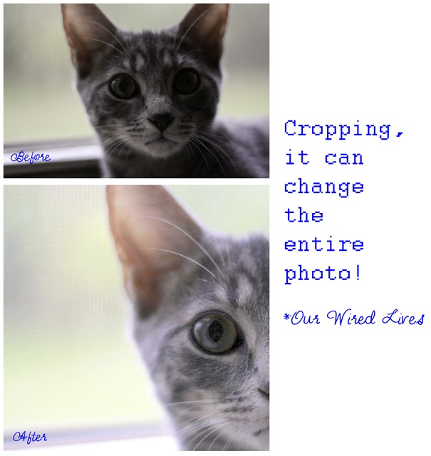 Cropping Example 2