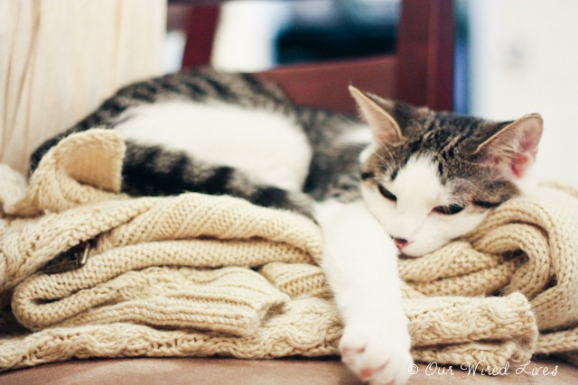 Sleepy Kitty